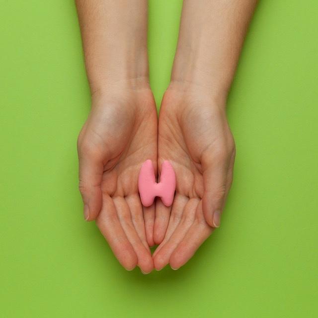 Photo de l'article Comment fonctionne votre thyroïde?